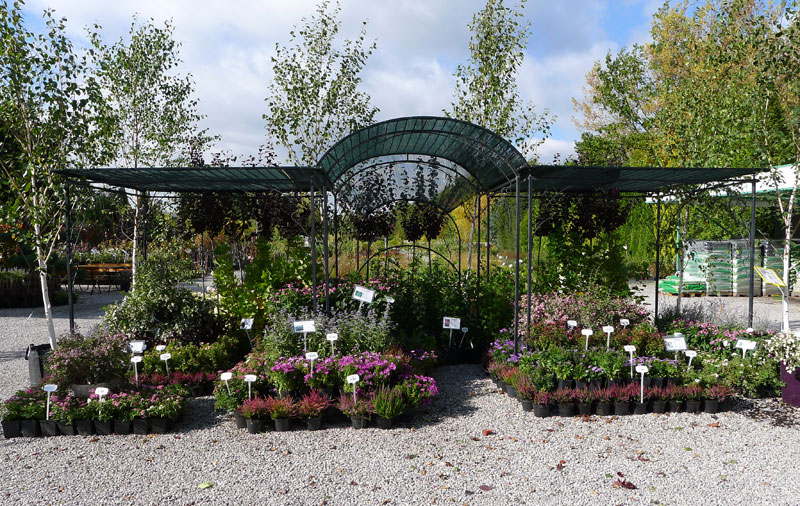 nursery of ornamental plants shrub trees in containers production Poland